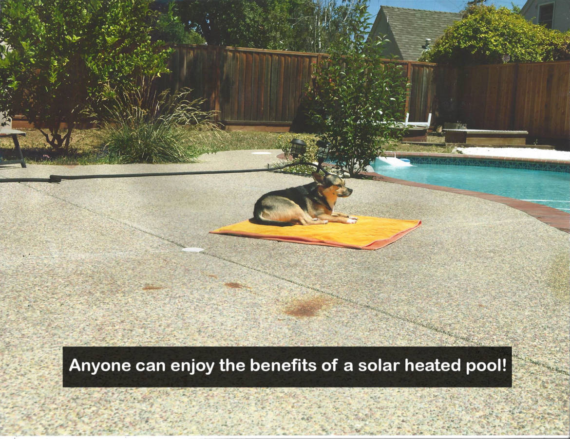 eco-solar-dog-image.jpg